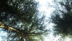 עצים צומחים אל האור